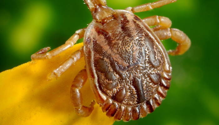 You Found A Tick On Your Child – Now What?